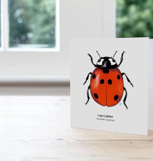 Hand Illustrated 7 - Spot Ladybird Card
