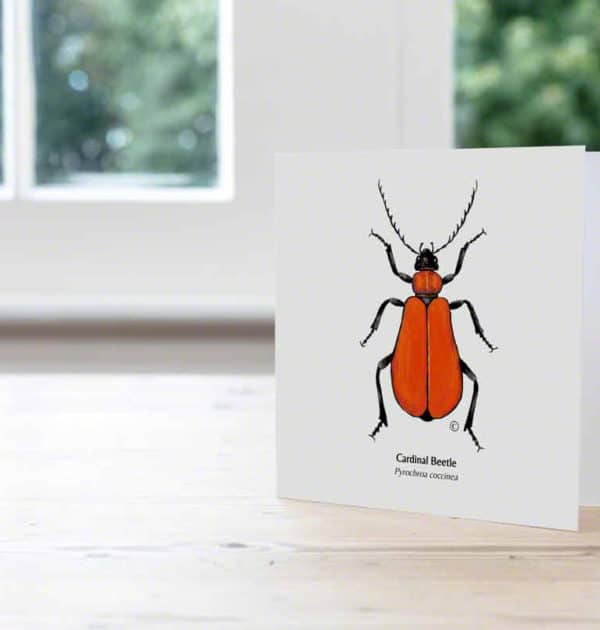 Hand Illustrated Cardinal Beetle Card