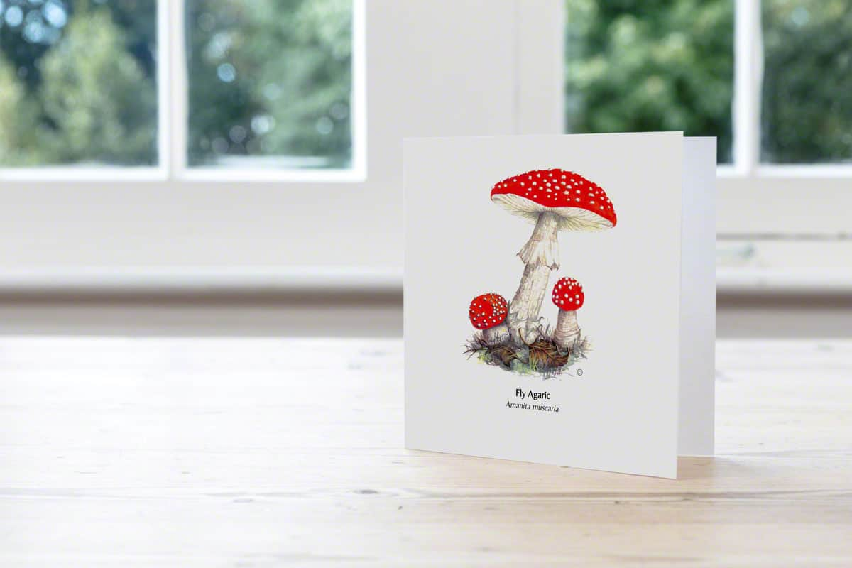 Hand Illustrated Fly Agaric Card