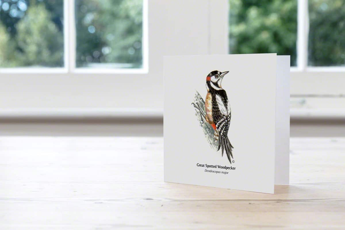 Hand Illustrated Greater Spotted Woodpecker Card