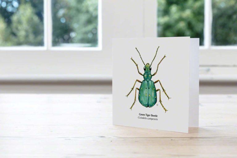 Greetings card, Green Tiger-Beetle illustration
