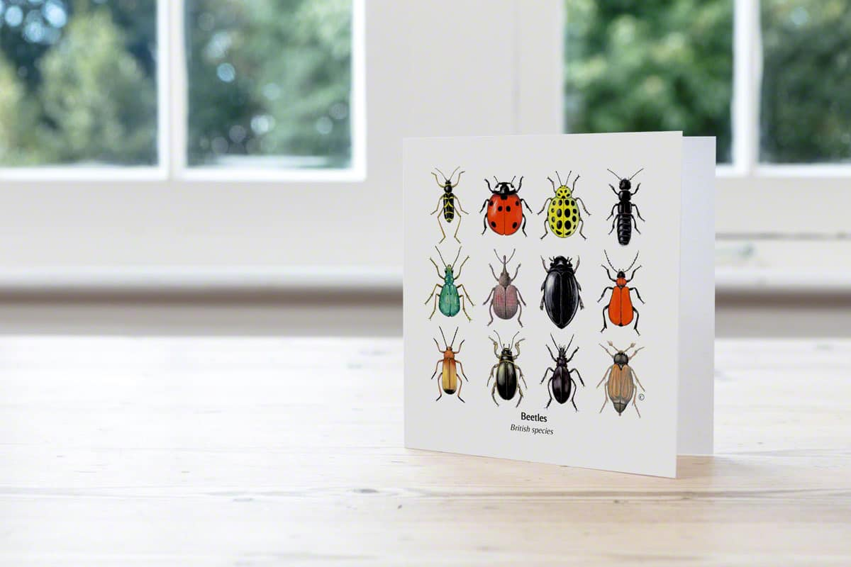 Mixed British Beetles Cards