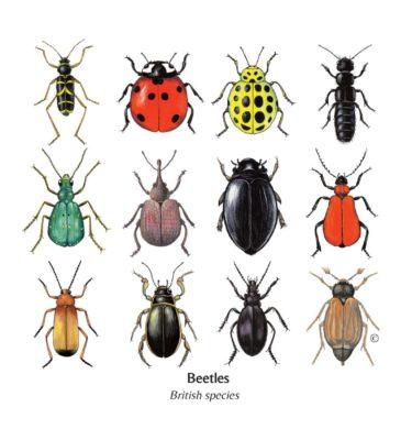 Mixed British Beetles Cards
