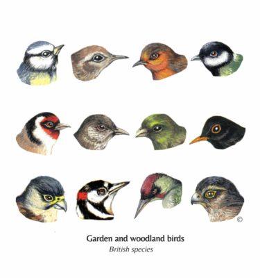 Mixed British Garden & Woodland Birds Cards