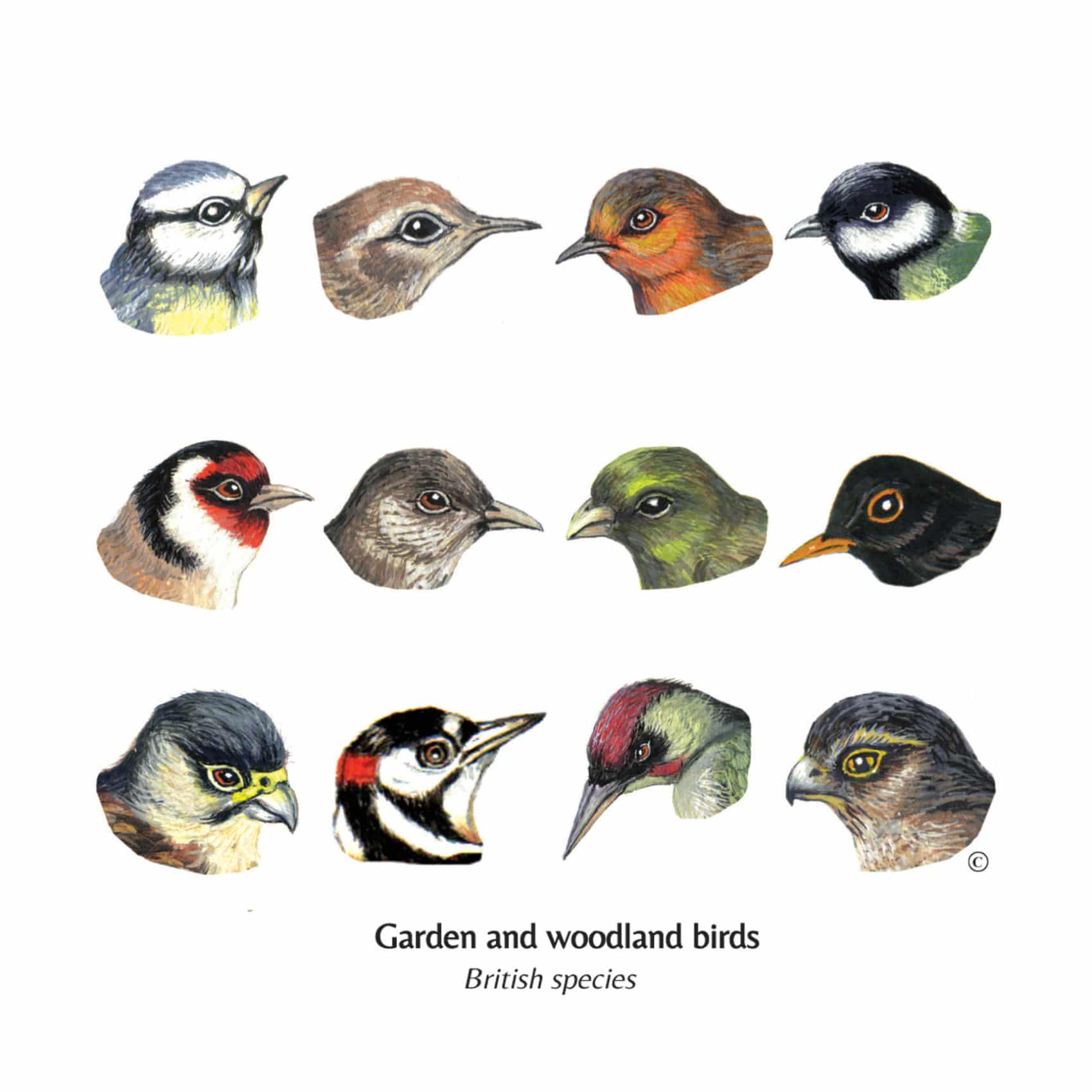 Mixed British Garden & Woodland Birds Cards