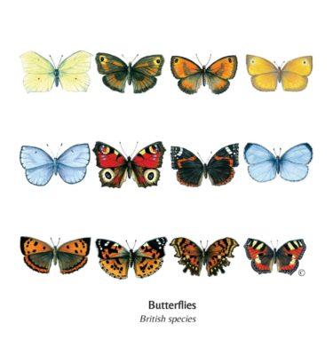 Mixed British Butterflies Cards