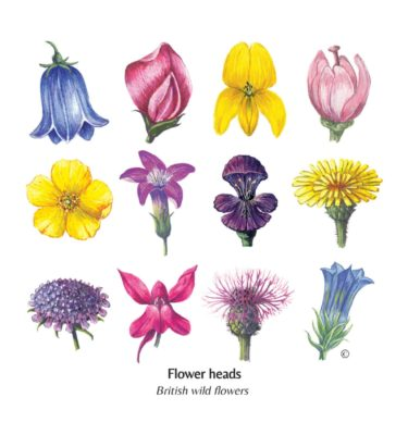 Mixed British Flower Head Card