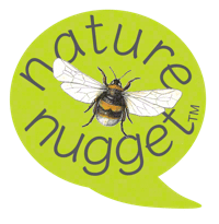 Bumble bee facts and illustration