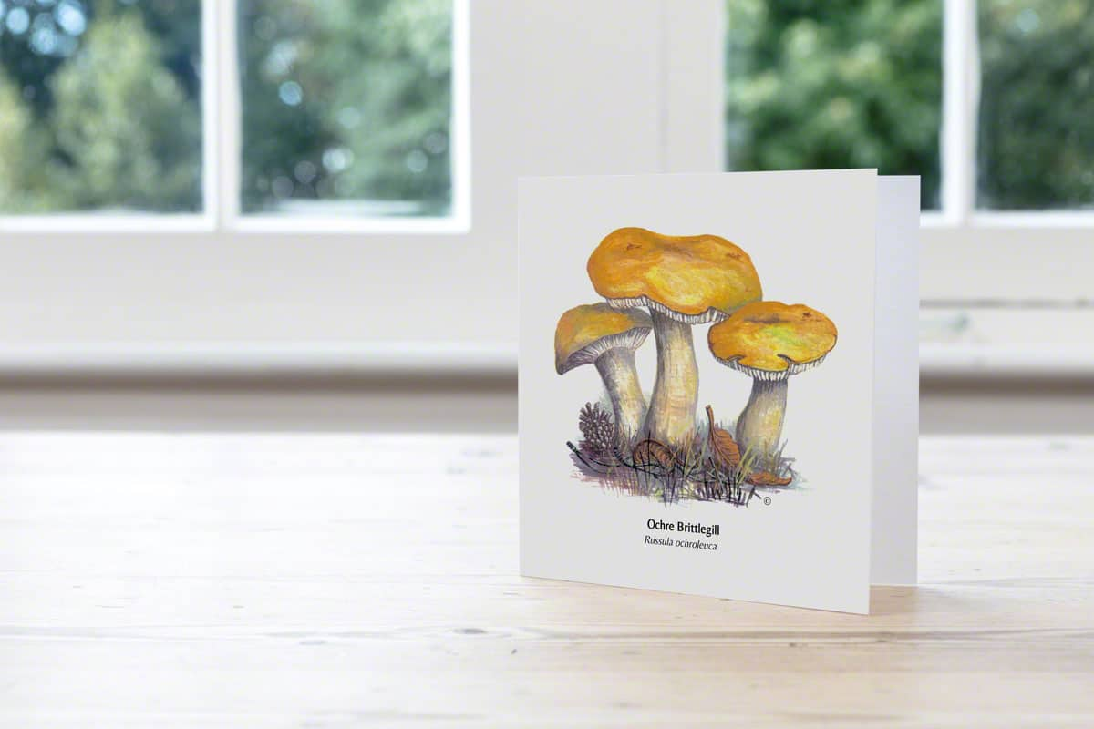 Ochre Brittlegill Hand Illustrated Card