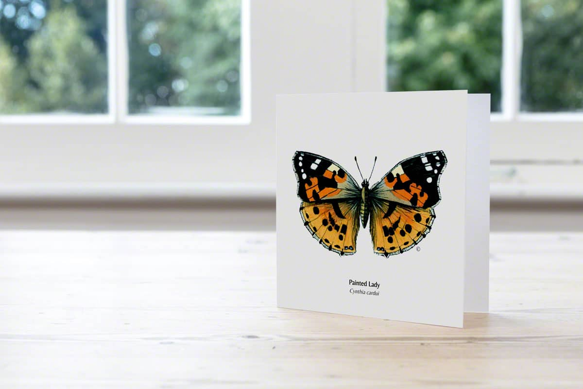 Hand Illustrated Painted Lady Butterfly Card