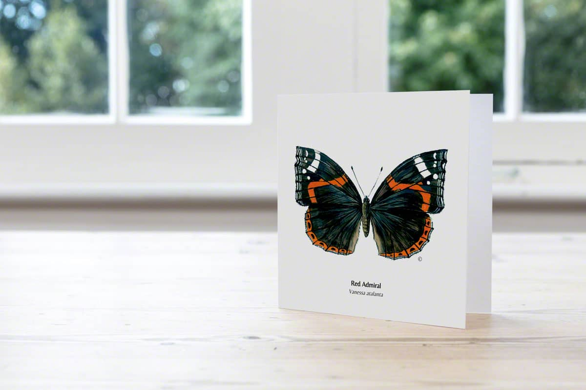 Hand Illustrated Red Admiral Butterfly Card