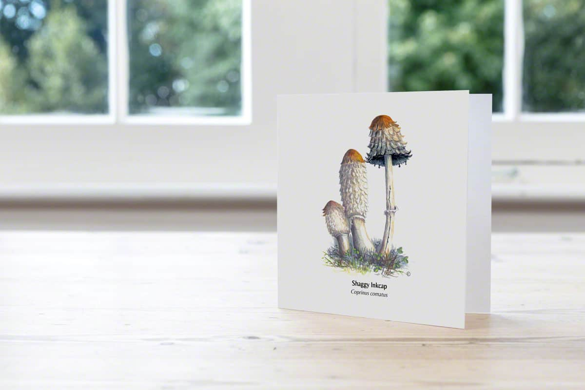Shaggy Inkcap Hand Illustrated Card