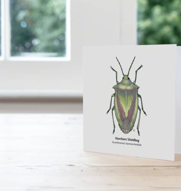 Hand Illustrated Hawthorn Shieldbug Card