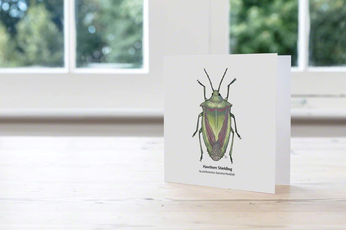 Hand Illustrated Hawthorn Shieldbug Card
