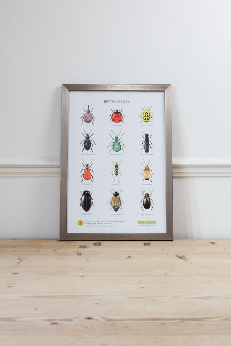 Unframed Poster of British Beetles