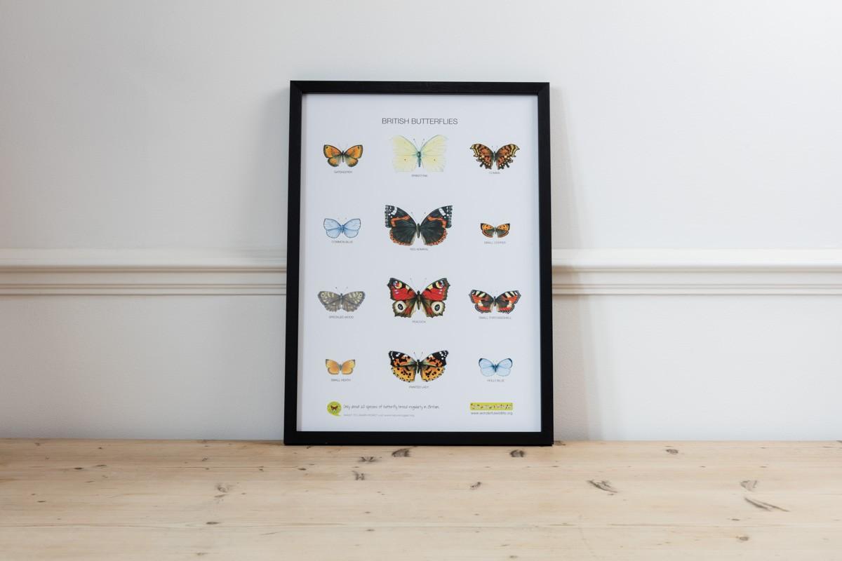 Unframed Poster of British Butterflies