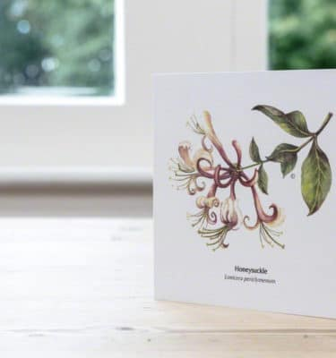 buy Hand Illustrated Honeysuckle greeting Card