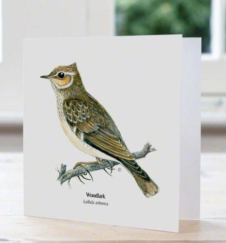 Woodlark, British bird, card